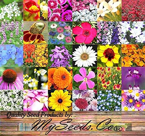 PERENNIAL Wildflower SEEDS - BULK MIX - Minimum 30 VARIETIES - 100 seed NO FILLERS - By MySeedsCo 001 oz - 350 sq ft