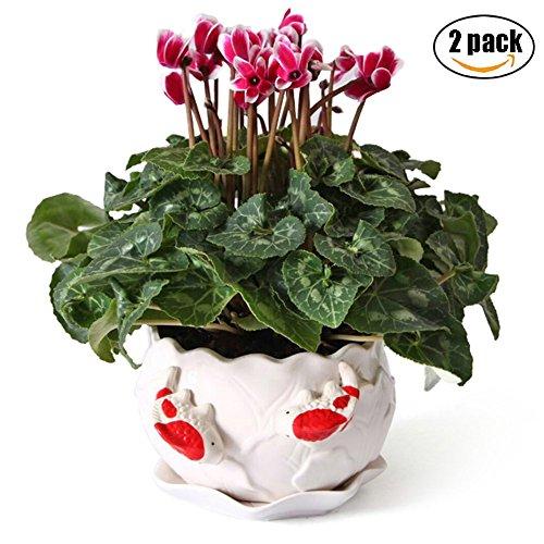 Ceramic Succulent Planter Flower Pot Decorative Double Fish Design with Drainage PlateWhite-2 Pack