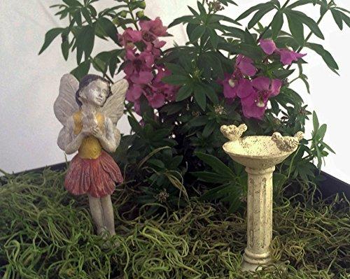 Fairy Garden Set - Fairy Holding A Bird Birdbath And Fairy Garden Design Ideas total 3 Items