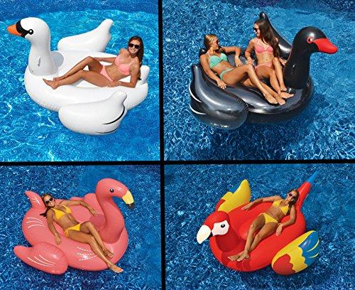 Swimline Swimming Pool Float Lounger Set WhiteBlack Swans  Flamingo  Parrot --PEWT43 65234R3FA624798