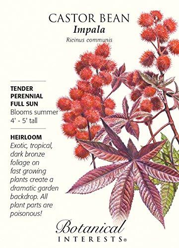 Castor Bean Impala Seeds - 4 grams - Fast Growing