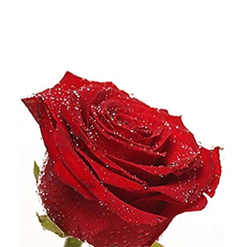 Braceus 20Pcs Rose Seeds Solid Color Flower Seeds for Garden Decor - Red