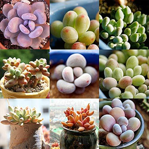 Yvetti 300Pcs Mixed Rare Succulents Perennial Plant Seeds Easy to Grow Home Landscape Ornaments Plant DIY Bonsai Decor Yard Flower Plant 300pcs