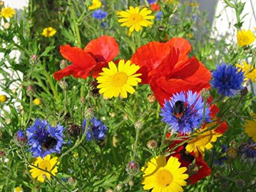 lot of 250 packets flower seeds packets minimum 5 varieties groco