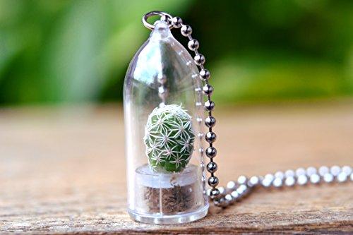 Snowball Cactus Plant Necklace Cactus Terrarium Gift