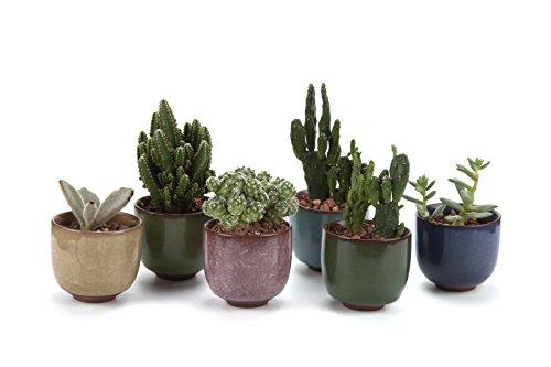 T4u 25 Inch Ceramic Ice Crack Zisha Raised Serial Sucuulent Plant Potcactus Plant Pot Flower Potcontainerplanter