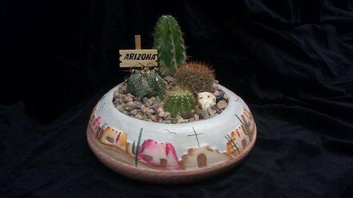 8 Pueblo Cactus Garden