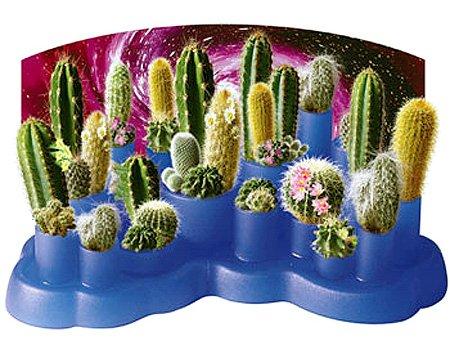 Odd Pods Cactus Garden