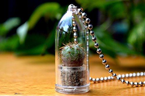 Melon Cactus Live Plant Necklace Cactus Terrarium