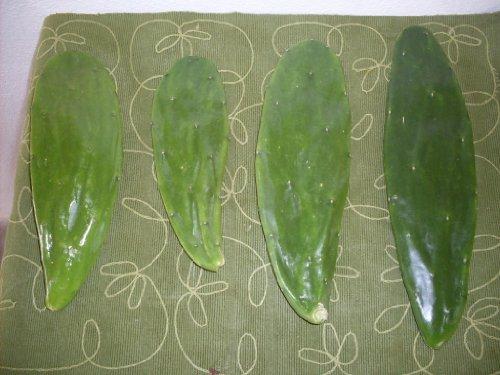 3 Three Prickly Pear Cactus Pads Opuntia Cochenillifera Naturally Grown From Artvine Nursery