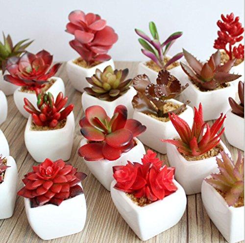Dutch Brook Mini Potted Simulation Red Succulents Artificial Cactus Plants for Home Office Garden Decor Sent Randomly