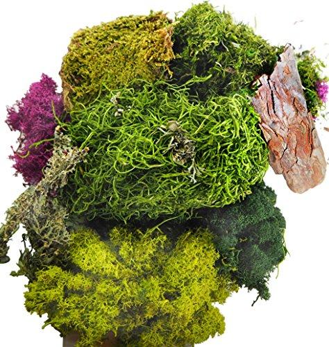 TerraGreen Creations Moss Fairy Garden and Succulent Terrarium Accent Pack - Several Moss Types - Bark - Mini Figures