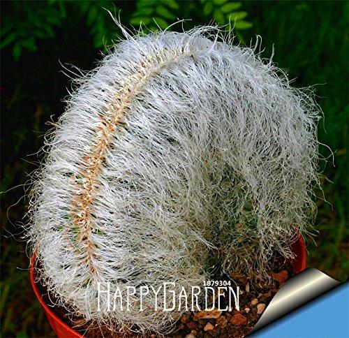 New Seeds 201510 pcsbag Ball cactus seeds rare succulent plant seeds Bonsai Celestial Flower pot planters Flores8HBLDN