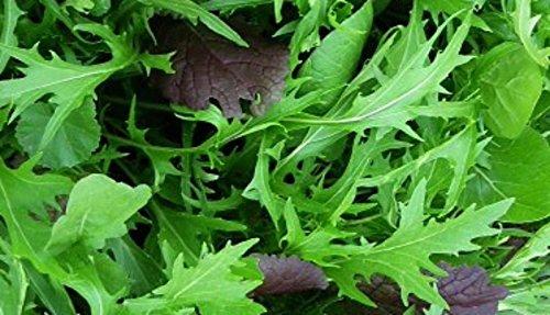 500 Mizuna Seeds ~ Japanese Salad Greens ~ Exotic Garden Vegetable ~ Annual