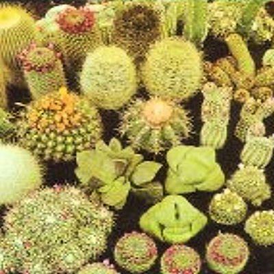 Cactus Cacti Variety Mix 100 Seeds