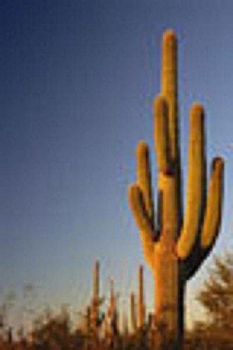 Carnegia Gigantea Saguaro Cacti Cactus Seed 20 Seeds