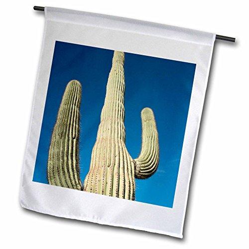 Danita Delimont - Cactus - USA Arizona Sonoran Desert Saguaro NP Giant Saguaro cactus - 18 x 27 inch Garden Flag fl_207663_2