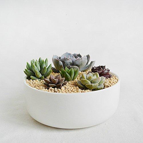 Big Round White Porcelain Succulent Planter-White Ceramic Succulent Planter