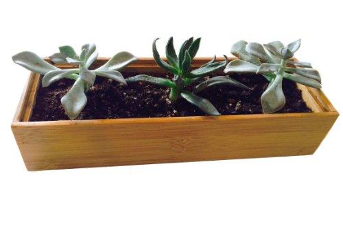 Succulentsamp Cactus Garden Growing Kit Wooden Bamboo Planter 3x9  Potting Soil  Rocks