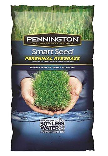 Pennington Smart Seed Perennial Ryegrass Blend 7 Lb