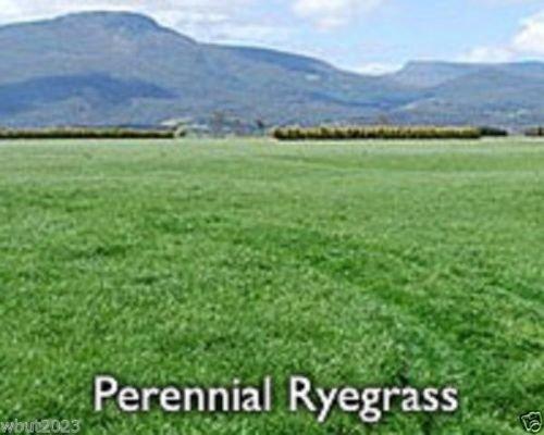 Perennial RyeGrass-lPURE SEEDSCover Crop-Grazing UseBeef DairySheep