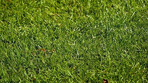 Perennial Ryegrass Seed Blend 500 Sqft