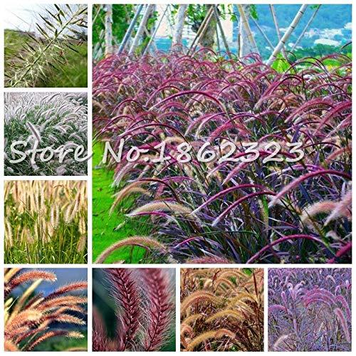 Kasuki 100 PcsBag Heirloom Pennisetum Alopecuroides Bonsai Ornamental Grass Plant for Home Garden Perennial Potted Planta Easy to Grow - Color Mixed