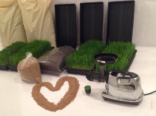 Rejuvenate Forever Certified Wheatgrass Growing Kit