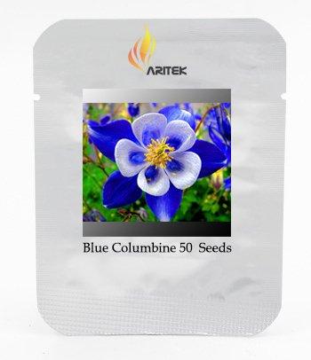 Rare Aquilegia Blue Columbine Perennial Flower Seeds Professional Pack 50 Seeds  Pack Very Beautiful Garden Flower E3370