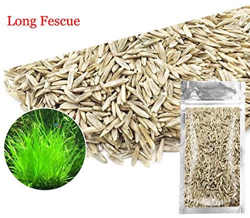 Aquarium Grass Plants SeedsAquatic Fescue Carpet Water GrassOxygenating Weed Live Pond Plant SeedsFish Aquatic Water Grass DecorEasy to Plant Grow Maintain-10G Green-Long F