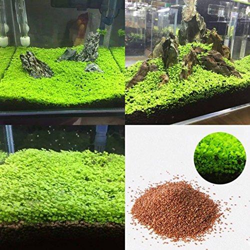 Seed Fish Tank Aquarium Plant Seeds Aquatic Water Grass Decor Garden Foreground Plant - S