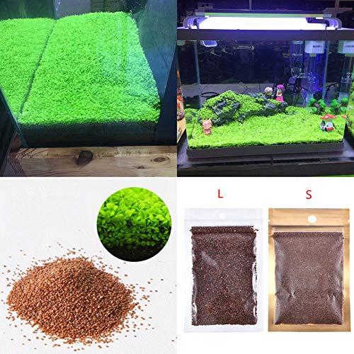 ocijf179 Fish Tank Aquarium Plant Seeds Aquatics Green Leaves Carpet Water Grass DecorSuitable KitchenBalconyLiving RoomGarden Decoration Love Grass