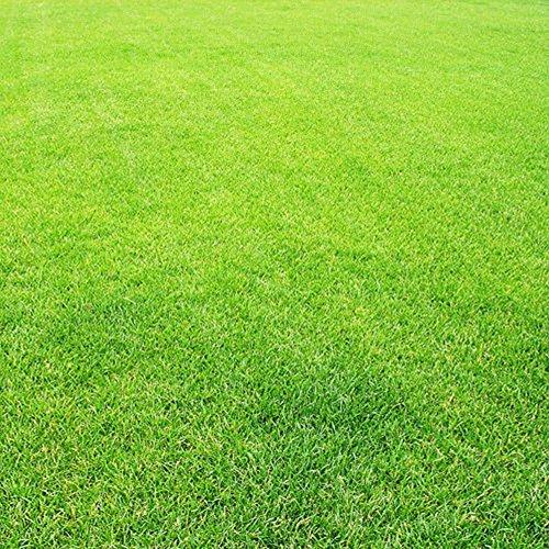 AT27clekca Lawn Seeds Repair Tool 300Pcs Greensward Grass-plot Lawn Grass Seeds Foliage Plants Yard Garden Decor