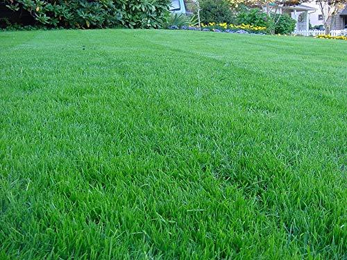 Kentucky Bluegrass Lawn Grass Seed 1 Pound