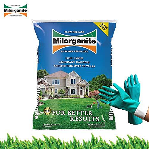Milorganite 0636 Organic Nitrogen Fertilizer Safer and Slow Release for Lawn and Grass Granular Nitrogen Fertilizer 32 lbs Bundled with Pearsons Protective Gloves