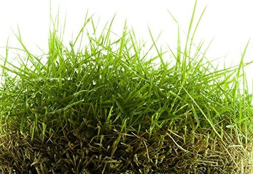 Zoysia Grass Seed Blend 500 Sqft