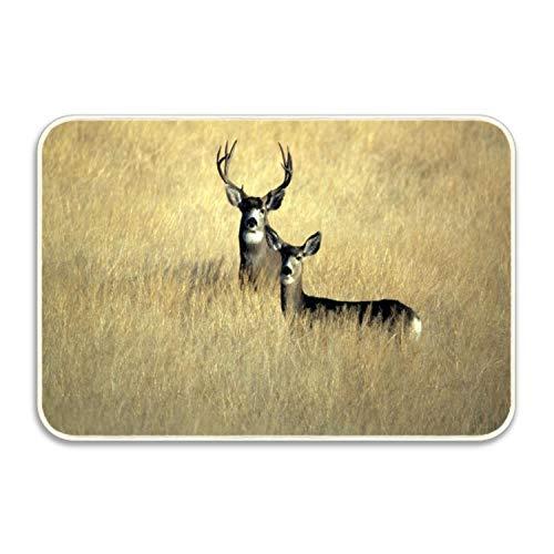 CustYANGLIU Mule Deer in Grass Area Rug Pad Non-Skid Kitchen Floor Mat for Living Room Bedroom 24x16 Doormats Home Decor Rubber Back