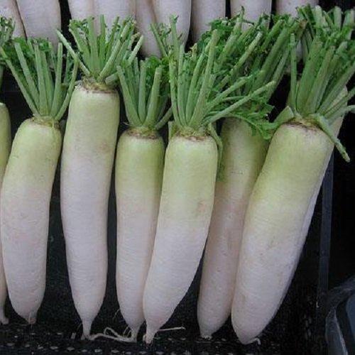 100 Seeds Of Raphanus Sativus - Chinese Daikon Radish Oshin - 60 Days Green Neck Type Reaching 2 Lbs