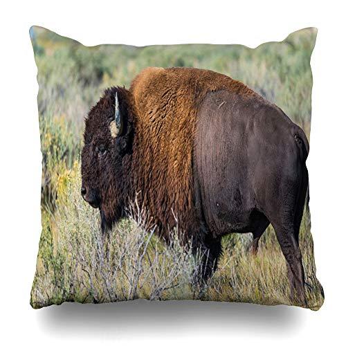 Ahawoso Throw Pillow Cover Pillowcase Square 16x16 Bison Animals Wildlife Nature Prairie Black Grass Short Majestic Old Large Horn Dangerous Plains Decorative Cushion Case Home Decor Pillowslip
