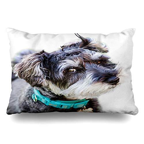Ahawoso Throw Pillow Cover 20x26 Inches Quirky Happy Mini Blurred Animal Schnauzer On Fluffy Lawn White Grey Soft Grass Animals Wildlife Decorative Pillowcase Home Decor Cushion Pillow Case