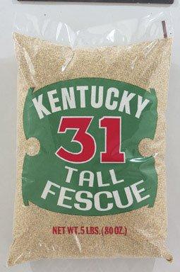 Barenbrug Kentucky 31 Tall Fescue Grass Seed 5 Lbs
