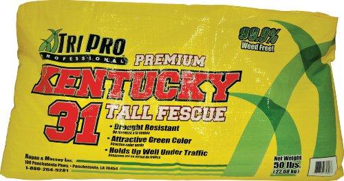 TriPro Kentucky 31 Turf-Type Tall Fescue Seed 50-Pound