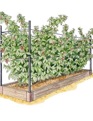 Raised Garden Bed Raspberry Bed Kit