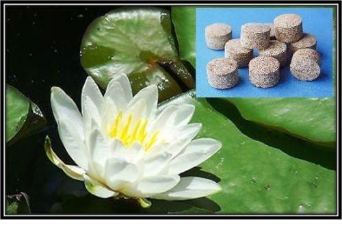 White Hardy Water Lily Pad Tuber Rhizome Waterlily Pondwater Plant