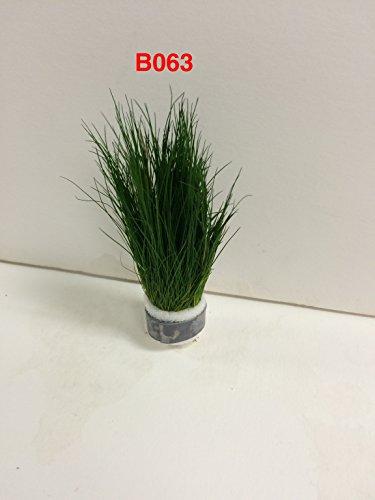 Eleocharis parvulus - Bundle Plants B063 - BUY 2 GET 1 FREE Live Aquatic Plant Online