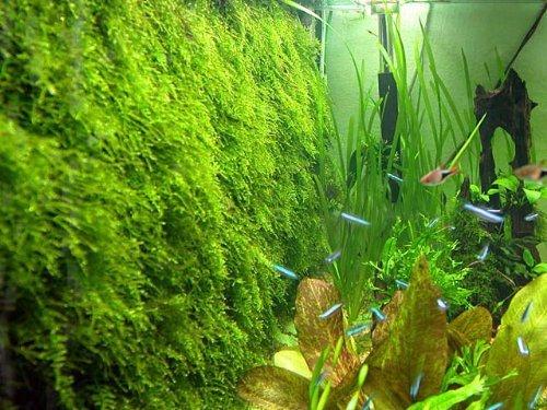 Moss Wall Mesh Kit -plant Not Included Decorate Bare Tank Live Aquarium Aquatic Plant For Fish Tank