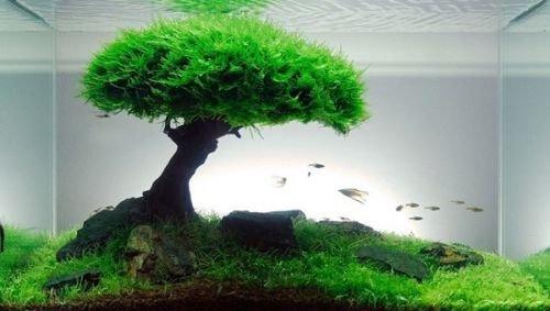 Xmas Moss-Live Aquarium Plant Java Fish Tank Fern Aquatic Seed Green Pond AQ21g