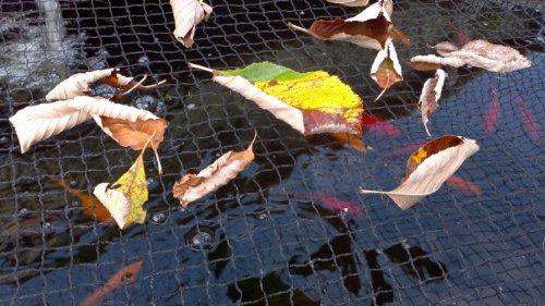 PondH2o Pond Netting 33 x 20