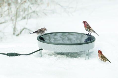 Heated Ground Bath