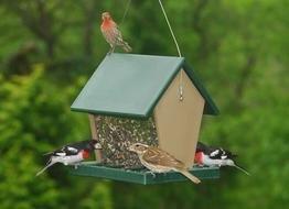Songbird Essentials Recycled Plastic Large Bird Hopper Feeder
